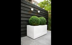 Modern patio garden , topiary  Kleine stadstuin in Amsterdam. Van Veen Tuinontwerpen tuinontwerp hovenier tuinaanleg