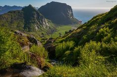 You wouldn´t expect to see that in Northern Norway, would you? Since spring has been extremely mild this year, everything was growing and had its full colours when I was on Lofoten. Already missing...