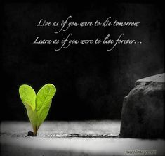 Learn as if you were to live forever...
