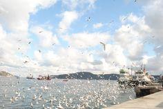 İstanbul/Türkiye - 2011