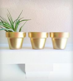 If we do a cool plant stand we can always do simple Terracotta planters and paint them.