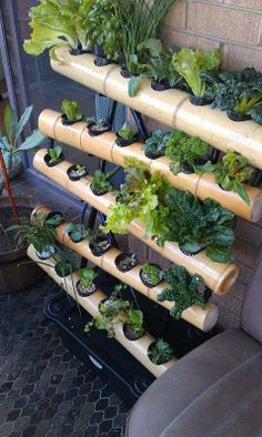 vertical #growing - source-  Hydroponics in Cambodia #garden