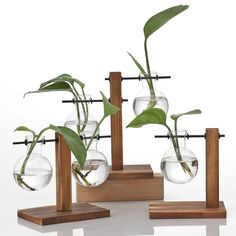 Hydroponic Wooden Frame Vasetransparent Glass | Etsy