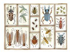 beetles weevils and flies