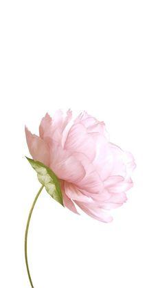 - Wallpaper World Flower Background Wallpaper, Flower Backgrounds, Wallpaper Backgrounds, Iphone Wallpaper, Background Noise, Watercolor Wallpaper Iphone, Background Drawing, Background Vintage, Watercolor Flowers