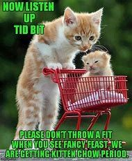 Brighten Your Day: Adorable Pets In Shopping Carts - World's largest collection of cat memes and other animals Cute Kittens, Cats And Kittens, I Love Cats, Crazy Cats, Cute Baby Animals, Funny Animals, Big Animals, Mama Cat, Photo Chat