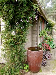 Really interesting alternative to a gutter, a rain chain draining into a large gardening pot. Also a water feature