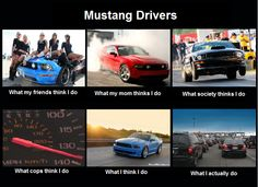Mustang drivers (I don't have one but it seems like everyone else in my family does)
