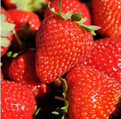 Strawberry, Ozark Beauty (everbearing, best for canning and jams)