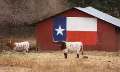 Texas, gotta love it