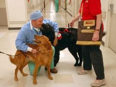 Check out our project on local hospitals' animal therapy programs. Prescription pooches: Good Sam Hospital's animal therapy is good medicine for cancer patients, dog owners