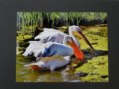 Feeding by Kathleen Mendel - 2012/2013 BSCC Color Print of the Year.