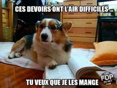 """""""Those homeworks look difficult... Do you want me to eat them ?"""" — Les FDP du net"""
