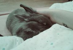 Relax with bunny Rabbit, Bunny, Relax, Animals, Rabbits, Cute Bunny, Animales, Animaux, Bunnies