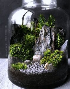 Giving a natural touch at home can be done in different ways. One way is to display the terrarium. The terrarium is a small garden in a glass container. Large Glass Jars, Clear Glass, Clear Crystal, Moss Plant, Deco Nature, Succulent Terrarium, Terrarium In A Jar, Succulents Garden, Terrarium Closed