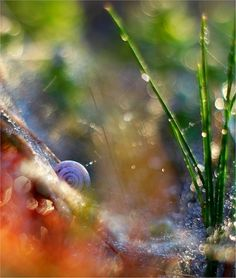 snail shell with grass on pastel