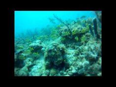 Hamm Reef Scuba Dive - Islamorada Florida Keys - http://www.florida-scubadiving.com/florida-scuba-diving/hamm-reef-scuba-dive-islamorada-florida-keys/