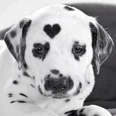 heart spots