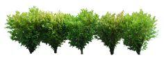 bushes - Google Search