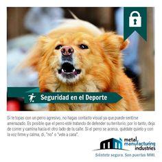 Si sales a correr y te te topas con un perro agresivo no hagas contacto visual con él, puede sentirse amenazado. ¡Comparte este tip y salva a tus amigos de una mordida! #SeguridadDeportiva