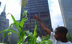 Permacultura e agricoltura urbana: cosa sono?