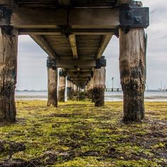 Under Griffin Gully Jetty Geelong 01/01/2016 #livelovegeelong #thelowdown #destinationgeelong #geelong #geelongphotographer #perspective #lines @visitgeelongbellarine @lovecentralgeelong @destinationgeelong @geelongcoast @geelong_mayor @geelong_in_pictures @snippets_of_geelong by miclarkins_photography http://ift.tt/1JtS0vo