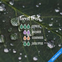 Forest Fresh - Essential Oil Diffuser Blend