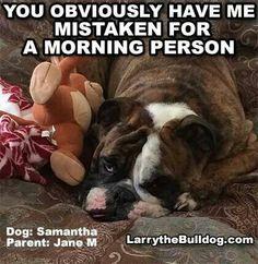 Not a morning bulldog. AC