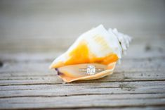 Beautiful wedding ring in a shell... image: Palm Beach Photography