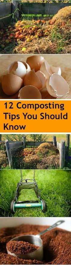 12 Composting Tips You Should Know