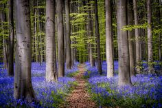 Bienvenue dans la forêt enchantée... de marc_1328 est la Photo du Jour! Une petite dernière car cet endroit le mérite bien. J'en ai encore d'autres mais je m'arrêterai là. Bon dimanche à tous.  fotoloco.fr: Cours Photo gratuits et Concours Photos.  Une communaute de 22,000 passionnes! #nature #paysage #paysages #instapaysage #beaupaysage #NatureetPaysage #Canon70200 #Canon70200mm #Canon5DMarkIII #Canon #fotoloco #fotoloco_fr #concoursphoto #coursphoto #photographe #ph