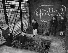 kids <3 batman.