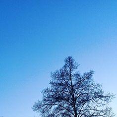 Snake #soulfoto #tree #nature #minimal #minimalism #sky #blue