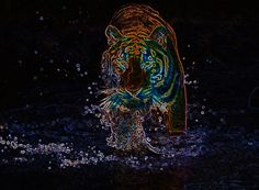 1000+ images about Neon background on Pinterest | Neon ...