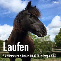 #shortrun mit Labradortempo Marla war es schon zu warm . Alles gut hab eh #nachtschicht heute. Schönen Abend  . Das ist Tom das andere Pferd meines Sohnesein Sonnenschein. #horse#pony#pferdeliebe#frechdax#welch#guterjunge#laufen#laufenmithund#laufliebe#laufenmachtglücklich#run#runforfun#running#runnergirl#runners#instarunners#instarun#trail#trailrun#trailrunnergirl#ilovesport#fitness#fitgirl#garmin#asics#ilovehorses#ilovedogs by 3cats2dogs3horses