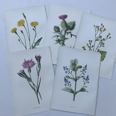 Excited to share this item from my #etsy shop: 5 Familiar Wild Flower Book Plates, Colour 1930s Book Plates, Vintage Ephemera,  Card Book Illustrations Vintage Ephemera, Vintage Cards, Card Book, Beautiful Mask, Book Illustrations, Vintage Sewing Patterns, Zine, Vintage Floral, Pattern Fashion