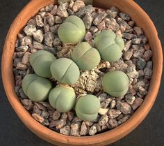 """epochalys: """"tiny butt plant if u ever feelin sad, just remember there is a…"""