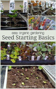 Easy Organic Gardening Seed Starting Basics: http://anoregoncottage.com/seed-starting-basics/