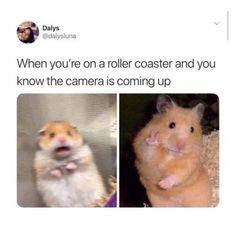 Funny pics today & lustige bilder heute & photos drôles aujourd'hui & fotos graciosas hoy & very funny … Funny Animal Memes, Cute Funny Animals, Funny Relatable Memes, Funny Jokes, Sarcastic Memes, Animal Humor, Funny Facts, Funny Tweets, Funny Instagram Pictures