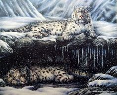 This print by B. Adair is a brilliant representation of snow leopards at rest. This magnificent pair of animals makes for one of the most beautiful leopard prints you will ever see. This member of the More