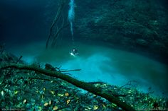 Some guy went under water and found an underwater lake--click on the link! Breathtaking!