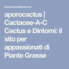 aporocactus   Cactacee-A-C Cactus e Dintorni: il sito per appassionati di Piante Grasse