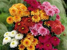 chrysanthemums-flowers-bouquet-different-bright-beautiful.jpg (1280×960)