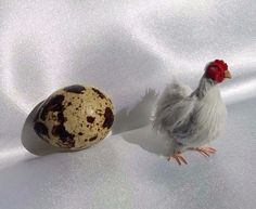 OOAK Dollhouse Miniature Realistic White Hen Animals Pet 1:12 Nico.Kunst  | eBay