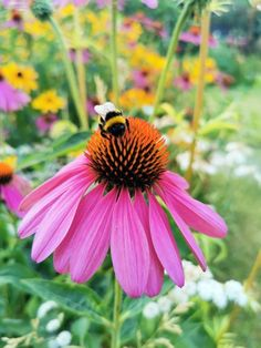 Coneflower or Echinacea Garden Nook, Garden Spaces, Town And Country, Country Living, Bee Friendly Flowers, Garden Inspiration, Outdoor Living, Backyard, Cottage Gardens