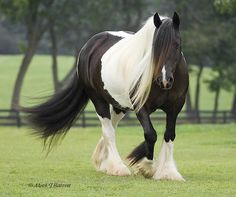 gypsy vanner pictures | Beautiful Horses - Gypsy's - a gallery on Flickr