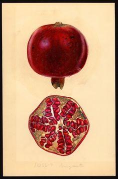 """Фото из альбома """"Плоды"""" - GoogleФото"""