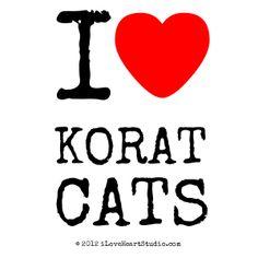 I love Korat Cats