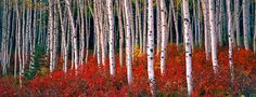 Steven Friedman Landscape Photography, Steven Friedman