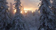 Finnish Forest Research Institute - Metla